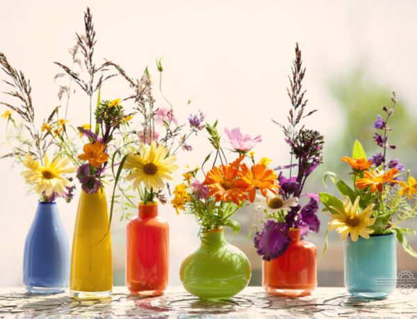 vases, flowers, sage, grasses, glass, beauty, photograph, still life