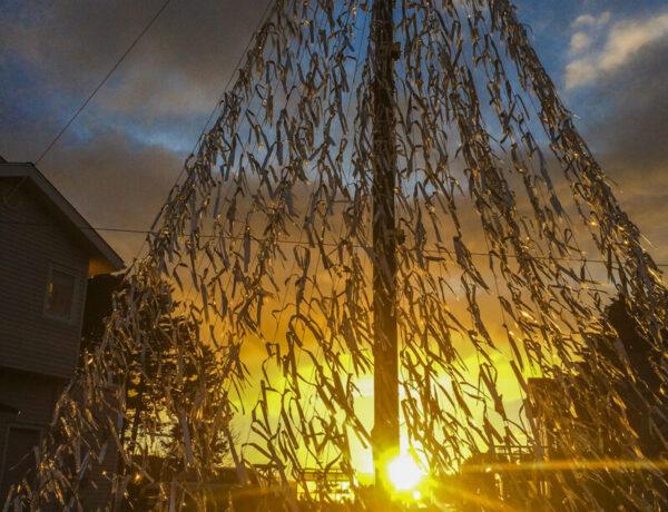 Christmas, tree, Kodiak, Alaska, sunset, outdoors, light, sun