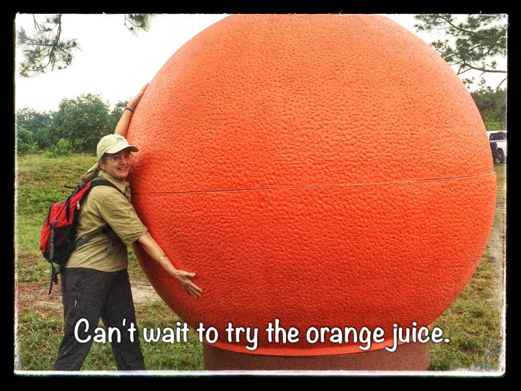 IMG_4633-Florida-orange