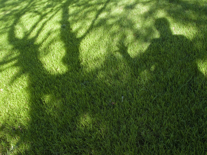 lawn care, best lawn fertilizer, organic gardening, Kodiak, Alaska