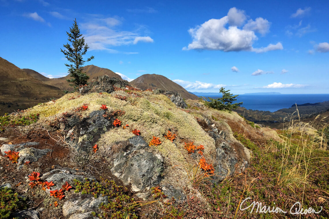 berries, hiking, Kodiak, Alaska, island, fall, autumn, colors, iPhone, photography, Marion, Owen