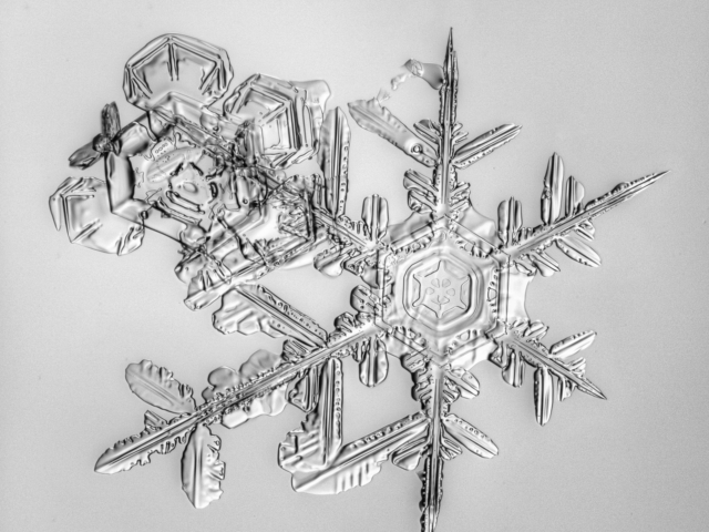 Snow, snowflake, snow crystal, real snowflake, snowflake photography, black and white