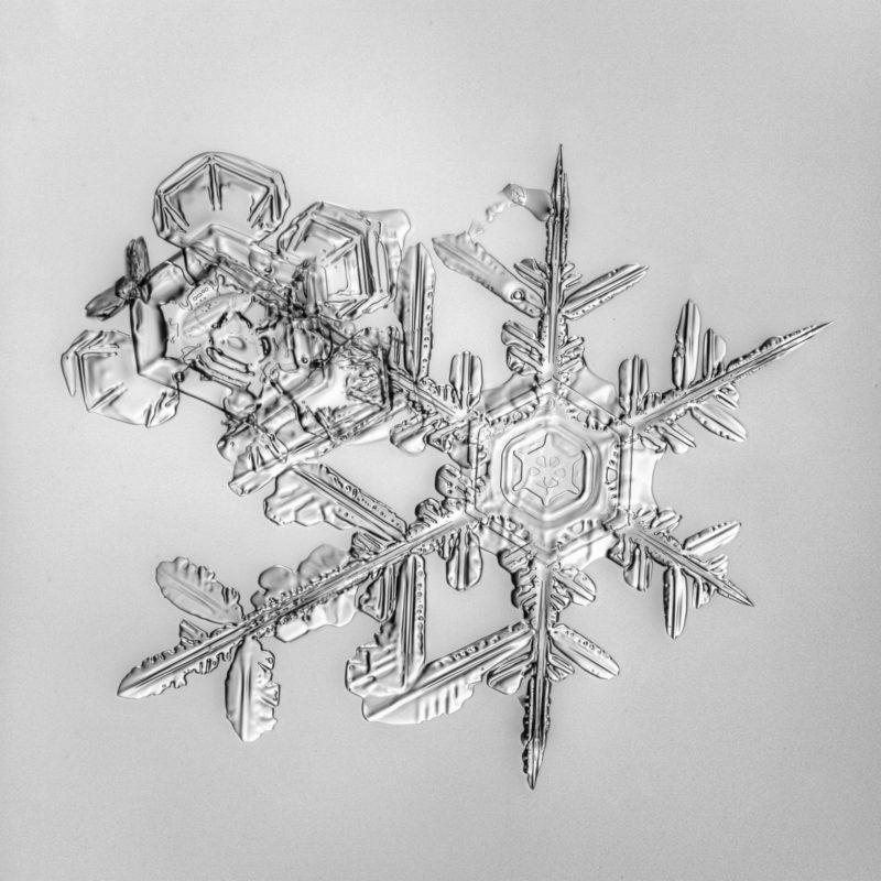 Snow, snowflake, snow crystal, real snowflake, snowflake photography, black and white