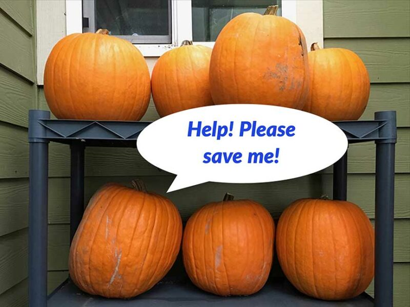 pumpkins, food waste, landfill