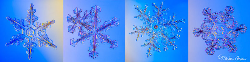 snowflakes, snow crystals, real, winter, snow