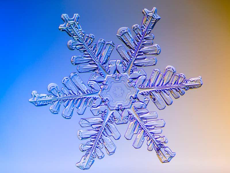 snowflake, real, snow crystal, nitrogen, fertilizer, organic gardening, Kodiak, Alaska