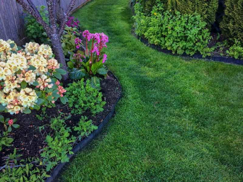 best lawn fertilizer, organic gardening tips, lawn care