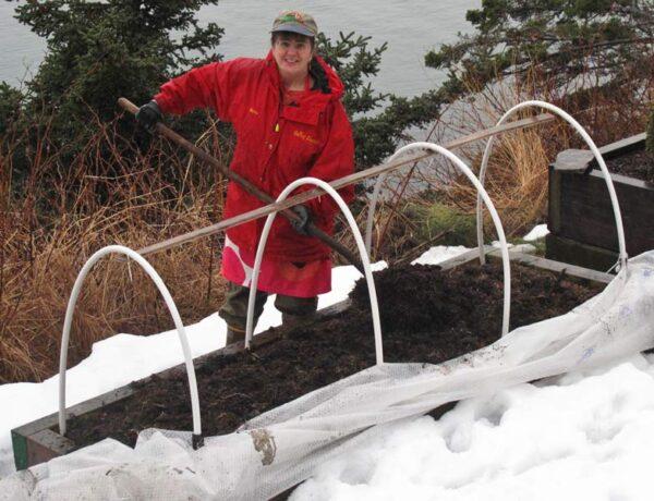Winter bedding plants, cool climate gardening, Kodiak, Alaska