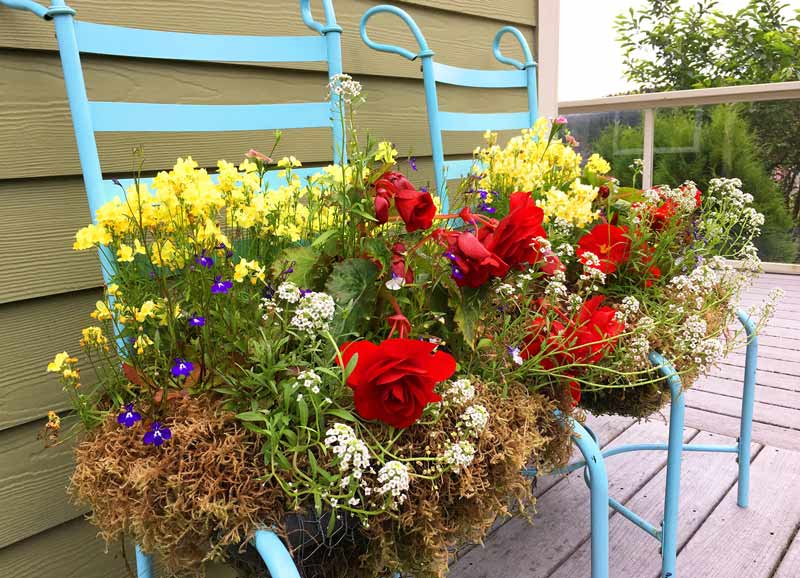 cool climate gardening