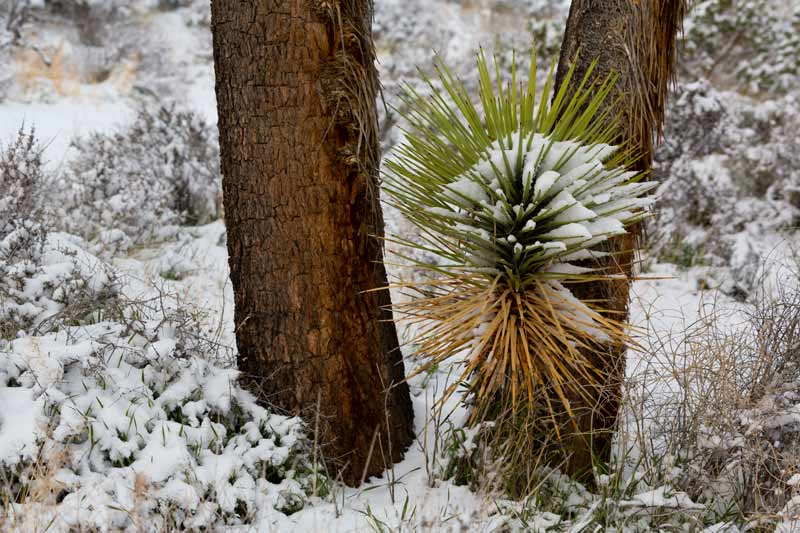 Joshua Tree National Park, snow, cactus, bucket list ideas, nature photography