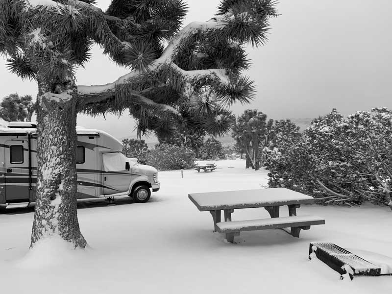 Black Rock Campground, Joshua Tree National Park, snow, cactus, bucket list ideas, nature photography