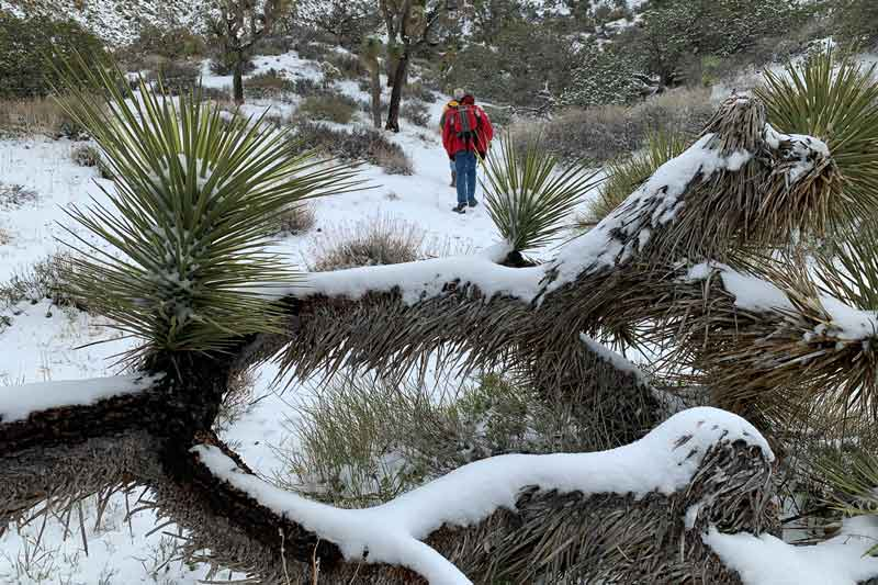 Hiking, Joshua Tree National Park, snow, cactus, bucket list ideas, nature photography