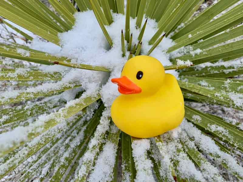 rubber ducky, bucket list ideas, Joshua Tree National Park, snow, cactus, nature photography