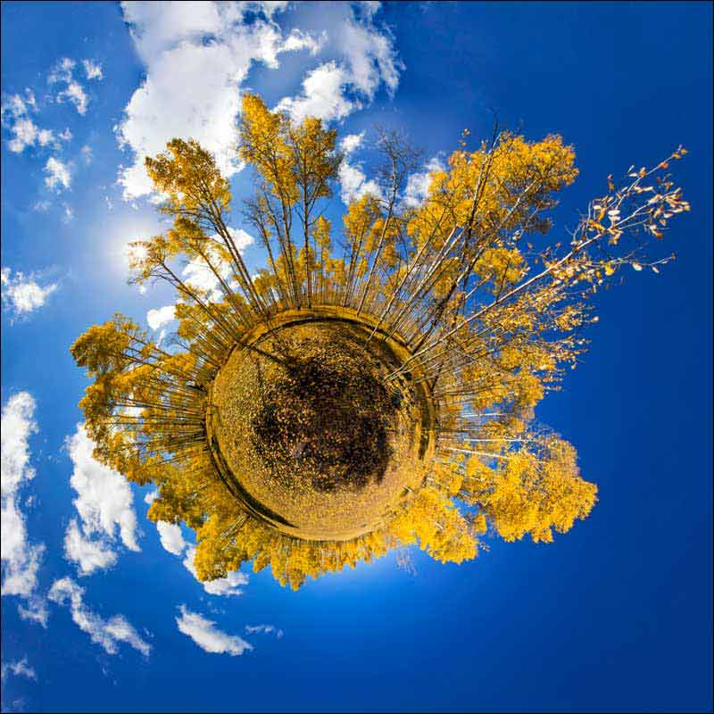 Little Planet view in a grove of aspens in fall colors.