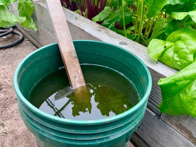 compost tea elixir in a bucket