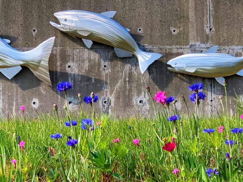 Closeup of salmon art on concrete wall in Kodiak, Alaska